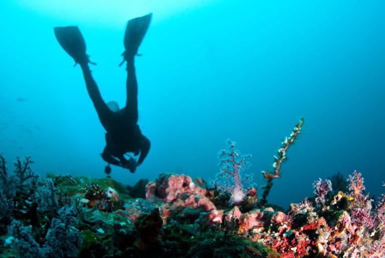 vaaddragt dykkerdragt dykning